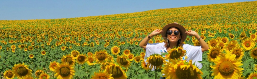 WHY ARE THE JAPANESE SO OBSESSED WITH SPAIN'S SUN FLOWERS?