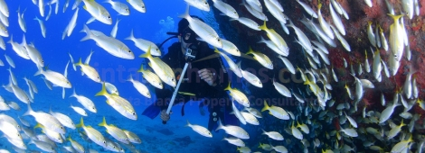 Murcia A Paradise for Divers